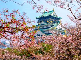 ทัวร์ญี่ปุ่น โอซาก้า เกียวโต  5 วัน 3 คืน ชมซากุระบานที่ปราสาทโอซาก้า ล่องเรือยากาตะบูเนะ *นั่งรถไฟแมวเหมียวสู่เมืองวาคายาม่า บิน TG โอซาก้า เกียวโต
