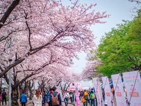 ทัวร์เกาหลี กรุงโซล 5 วัน 3 คืน สวนสนุกเอเวอร์แลนด์ ชมดอกซากุระ ณ ถนนยออีโด (ตั้งแต่กรุ๊ปวันที่08–15เมษายน61)  บิน TG  กรุงโซล