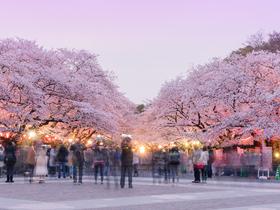 ทัวร์ญี่ปุ่น โตเกียว 5 วัน 3 คืน ขอพรเจ้าแม่กวนอิม ณ วัดอาซากุสะ  ชมเทศกาลดอกซากุระ ณ สวนอุเอโนะ บิน XJ โตเกียว