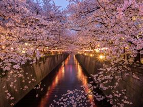 ทัวร์ญี่ปุ่น โตเกียว 5 วัน 3 คืน ภูเขาไฟฟูจิ(ชั้นที่ 5)  ชมซากุระ ณ แม่น้ำเมกูโระ บิน XJ โตเกียว
