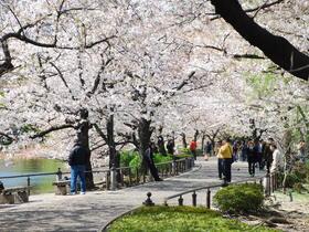 ทัวร์ญี่ปุ่น โตเกียว 5 วัน 3 คืน ภูเขาไฟฟูจิ(ชั้น5) ชมซากุระ ณ สวนอุเอโนะ *สวนดอกไม้ฮานะโนะมิยาโกะ บิน XJ โตเกียว