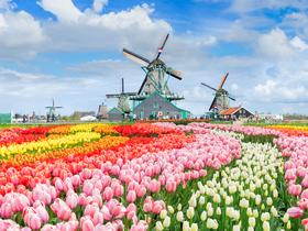 ทัวร์ยุโรป เยอรมนี เนเธอร์แลนด์ เบลเยี่ยม ฝรั่งเศส 8 วัน 5 คืน เทศกาลดอกทิวลิป ณ สวนเคอเค่นฮอฟ ล่องเรือหลังคากระจก บิน QR  เยอรมัน เนเธอร์แลนด์ เบลเยี่ยม ฝรั่งเศส