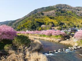 ทัวร์ญี่ปุ่น นาโกย่า ทาคายาม่า เกียวโต  5 วัน 3 คืน ริมแม่น้ำยามาซากิกาวะ(จุดชมซากุระ) ศาลเจ้าโอสึคันนง  บิน JL นาโกย่า ทาคายาม่า