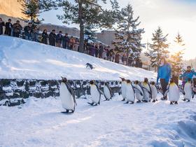 ทัวร์ญี่ปุ่น ฮอกไกโด ซัปโปโร 6  วัน 4 คืน ลานสกีชิกิไซ  สวนสัตว์อะซาฮิยามะ  บิน HB ฮอกไกโด