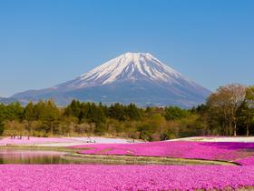 ทัวร์ญี่ปุ่น โตเกียว 5 วัน 3 คืน สุดฟิน!!กับทุ่งดอกไม้นานาชนิด ภูเขาไฟฟูจิ(ชั้น5) นั่งกระเช้าคาจิ คาจิ *พักฟูจิ1คืน บิน XJ โตเกียว