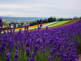 ทัวร์ญี่ปุ่น โตเกียว 5 วัน 3 คืน  เทศกาลชมดอกไม้ ณ ฮานาโนะมิโยโกะ   สวนดอกไม้  ณ สวนไคราคุเอน บิน XJ  โตเกียว