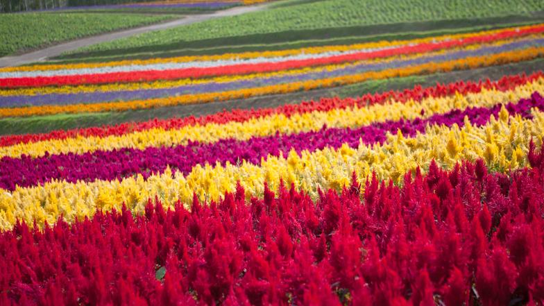 ทัวร์ญี่ปุ่น ฮอกไกโด ซัปโปโร 6 วัน 4 คืน พิพิธภัณฑ์น้ำแข็ง ICE PAVILLION  ชมเนิน 4 ฤดูแห่งดอกไม้ 'ซิกิไซโนะโอกะฟาร์ม' บิน  ไทยแอร์เอเชียเอกซ์