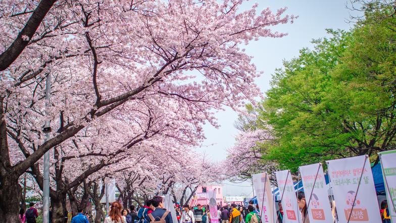 ทัวร์เกาหลี กรุงโซล 5 วัน 3 คืน สวนสนุก LOTTE WORLD ชมดอกซากุระ ณ สวนยออิโด(เฉพาะช่วงซากุระบาน) บิน Jin Air