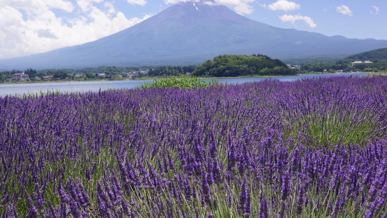 ทัวร์ญี่ปุ่น โตเกียว 5 วัน 3 คืน ภูเขาไฟฟูจิ(ชั้น5) ชมทุ่งดอกพิงค์มอสหรือลาเวนเดอร์ (ขึ้นอยู่กับช่วงพีเรียด) บิน ไทยแอร์เอเชียเอกซ์