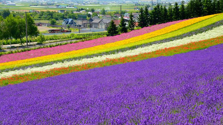 ทัวร์ญี่ปุ่น ฮอกไกโด 6 วัน 4 คืน  ชมความงาม 'สวนชิกิไซโนะโอกะ' สวนผลไม้(ตามฤดูกาล) บิน การบินไทย